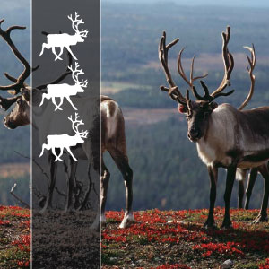 3 REINDEERs - This is our most common type of tour with clean and good mid-range hotels and motels from 2 to 4 stars. Kilometers from 200 to 600 a day. We will stop at the main attractions on the way. The normal length of a driving day is about 8h.