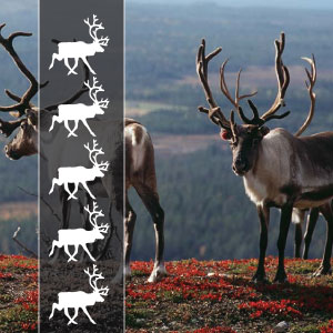 5 REINDEERs - These are extreme trips and are made for adventurous and experienced bikers!You will have sometimes long days and always very variable roads from the best to the worst and sometimes there are not even roads ;).