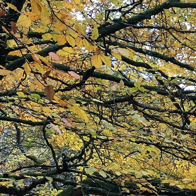 Autumn walk. What a beautiful tome of year. Very quiet in town today but with an amazing Firework and Bonfire in Lynmouth tonight, it won't stay that way for long. Keep warm dry and safe everyone. #calmbeforethestorm #lynmouth #lynmouthfireworks #autumn #lazysunday #exmoor #devon