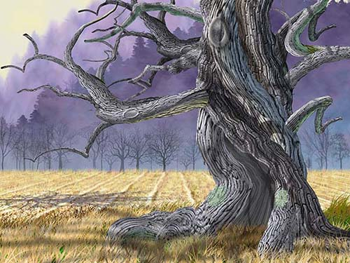 Purple Hills Oak500.jpg