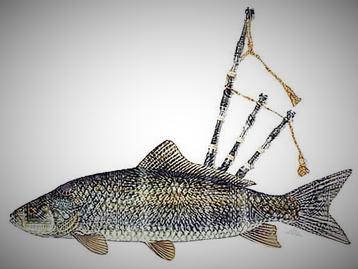 NYE fish.png