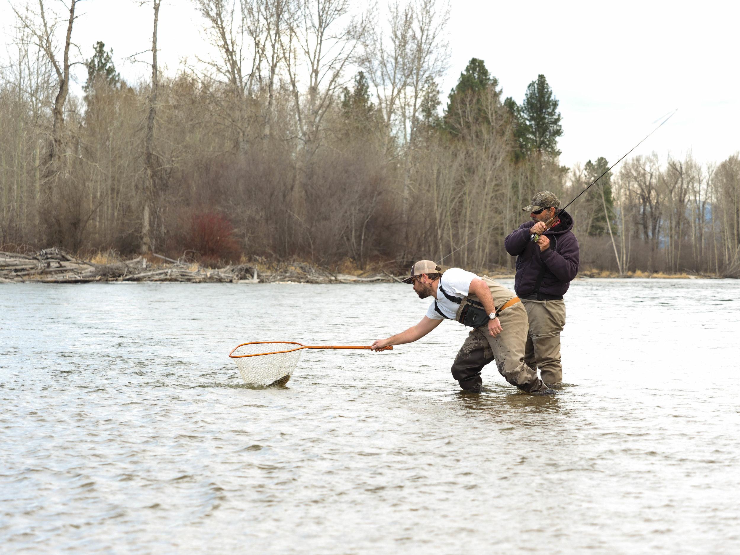 Wade fishing the Bitterroot River in Montana
