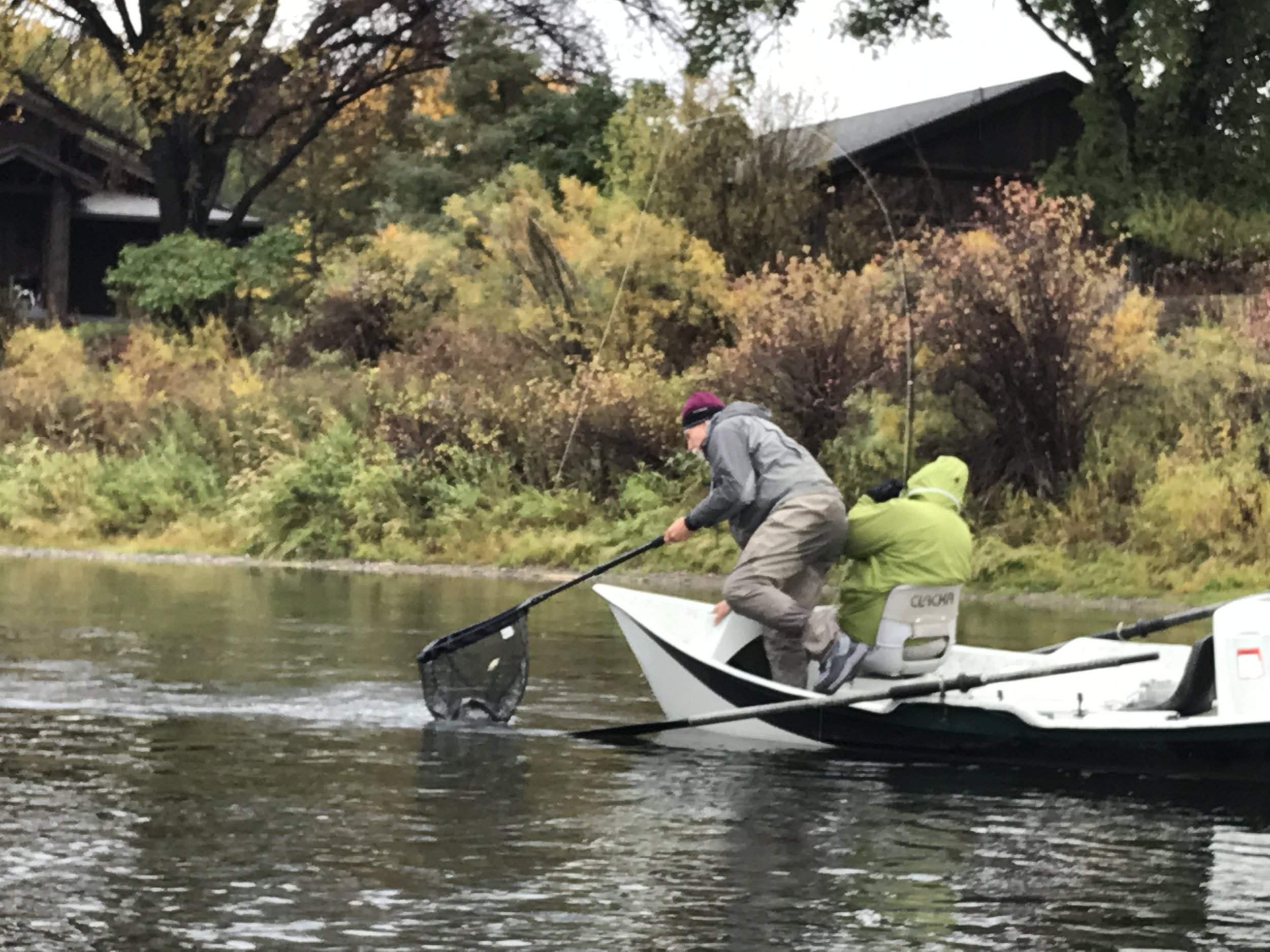 Netting another trout on the Missouri River