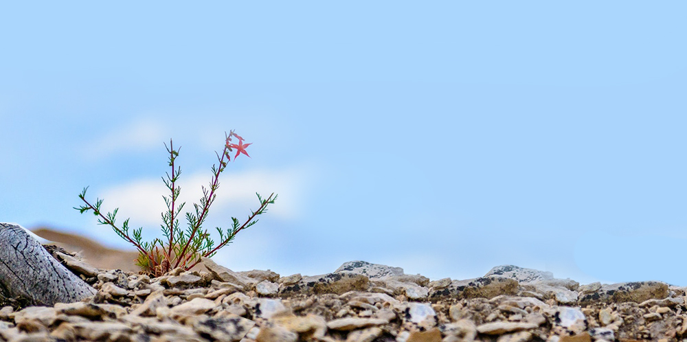 resilience-blog.jpg