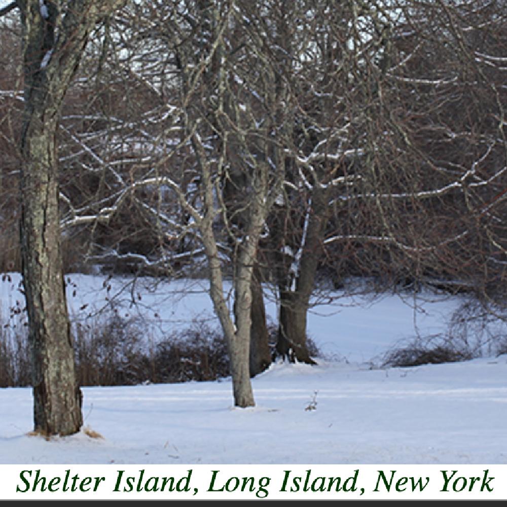 Shelter-Island.org