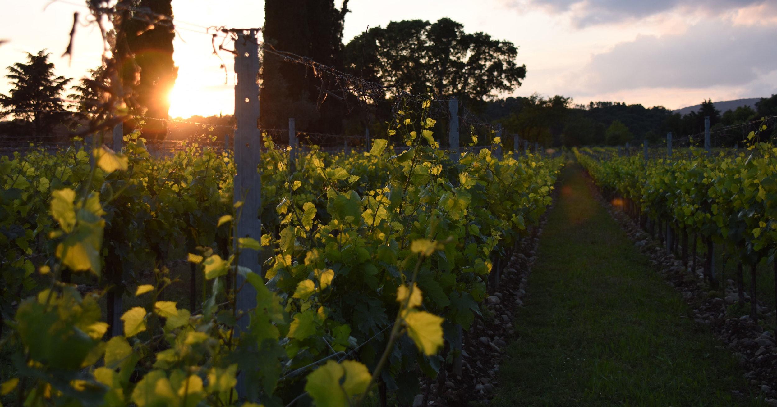 Franciacorta - La Vocazione di un Territorio per il Vino