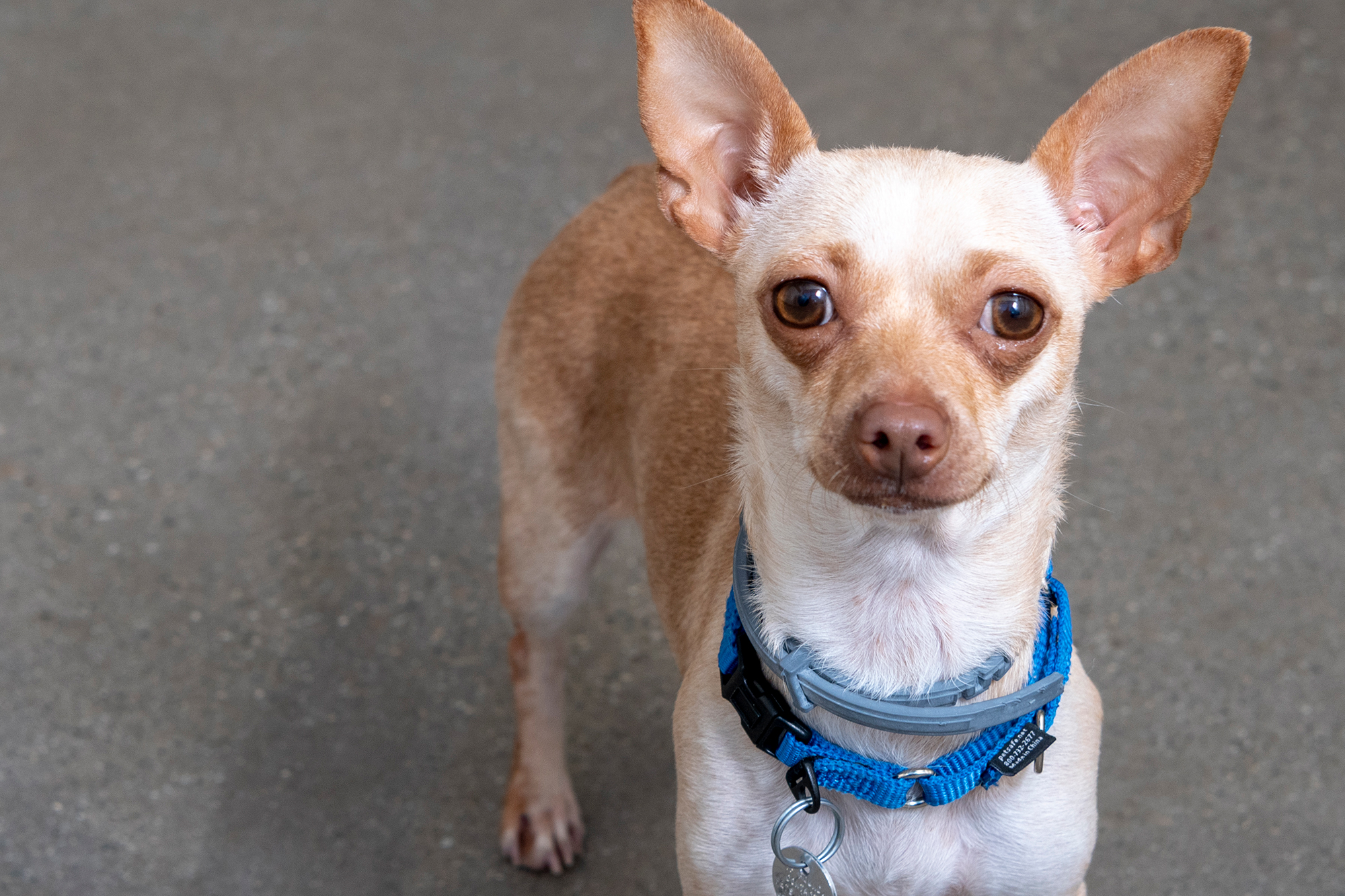READY TO ADOPT? - Meet our adoptable animals →