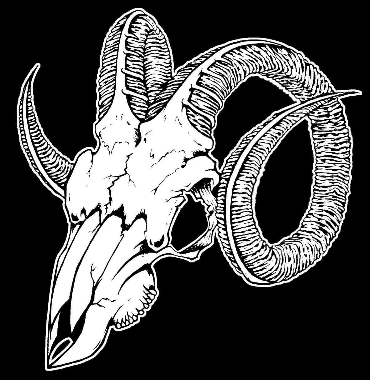 black sheep skull.jpg