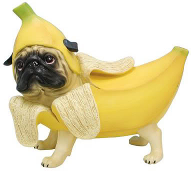 Email copy as amusing as a pug in a banana costume (but far more effective). - Can he still play fetch? How does he wee?