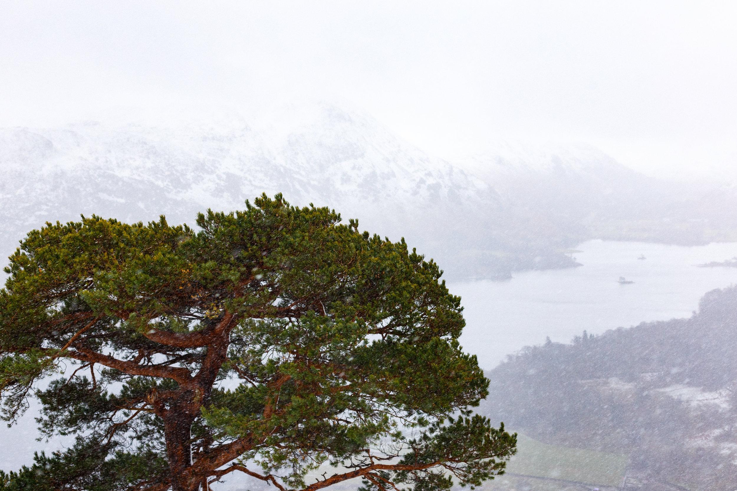 The Glencoyne Pine in Brutal conditions