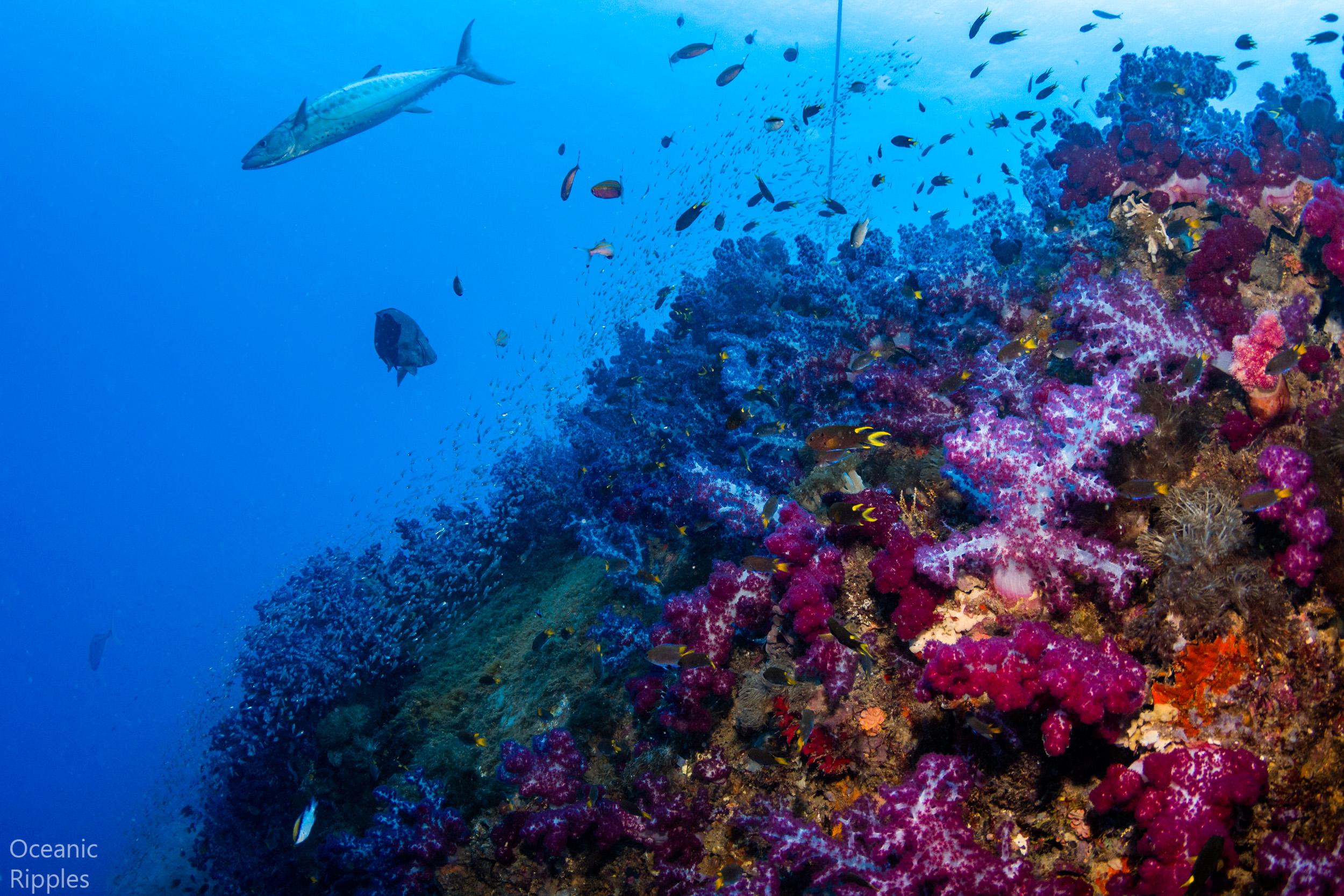Oceanic Ripples — SS Yongala Wreck, Australia
