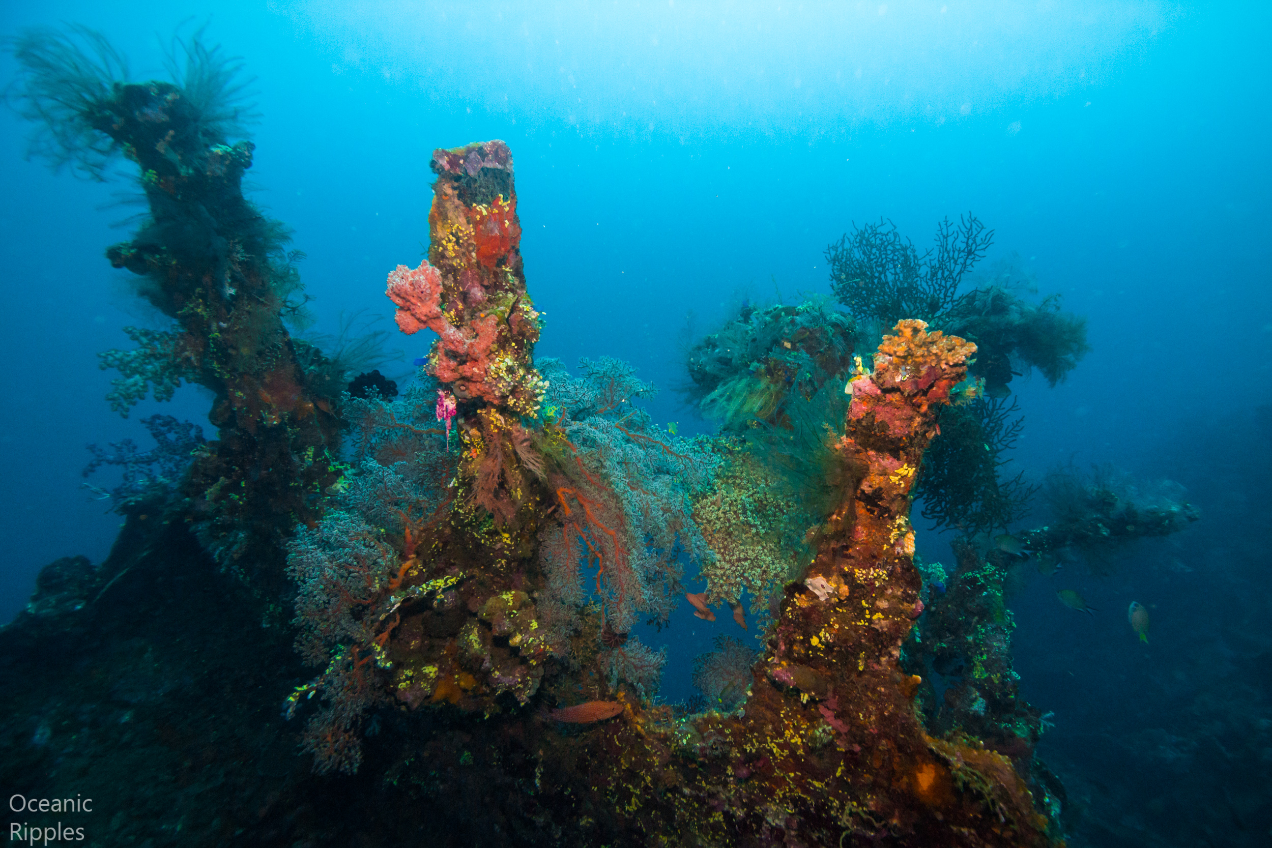 Some features of the USAT Liberty wreck at Tulamben. The wreck is entirely covered by coral, which can provide colorful, although occasionally busy photographic scenes.