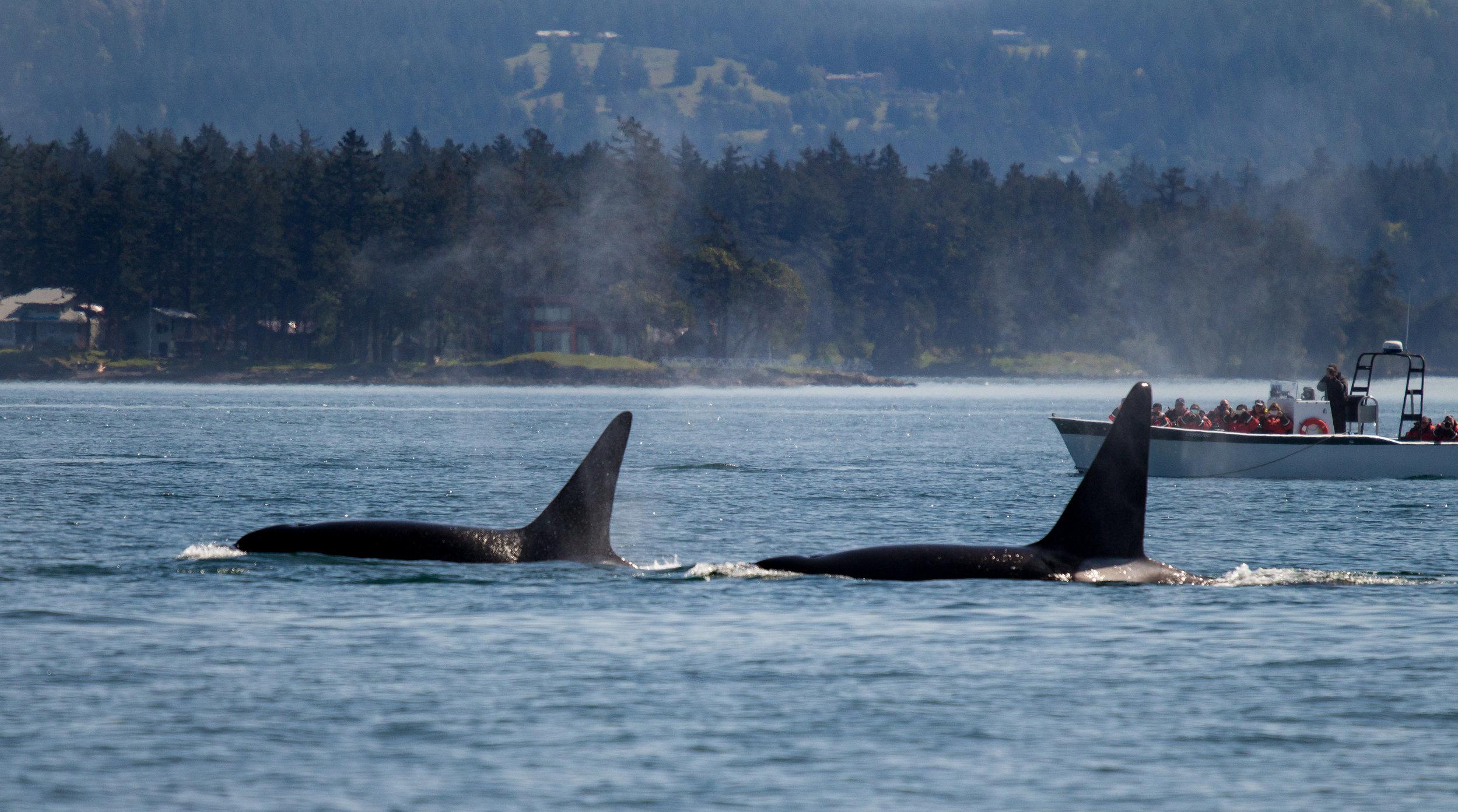 Two brothers heading towards Spieden Island. Photo by Natalie Reichenbacher.