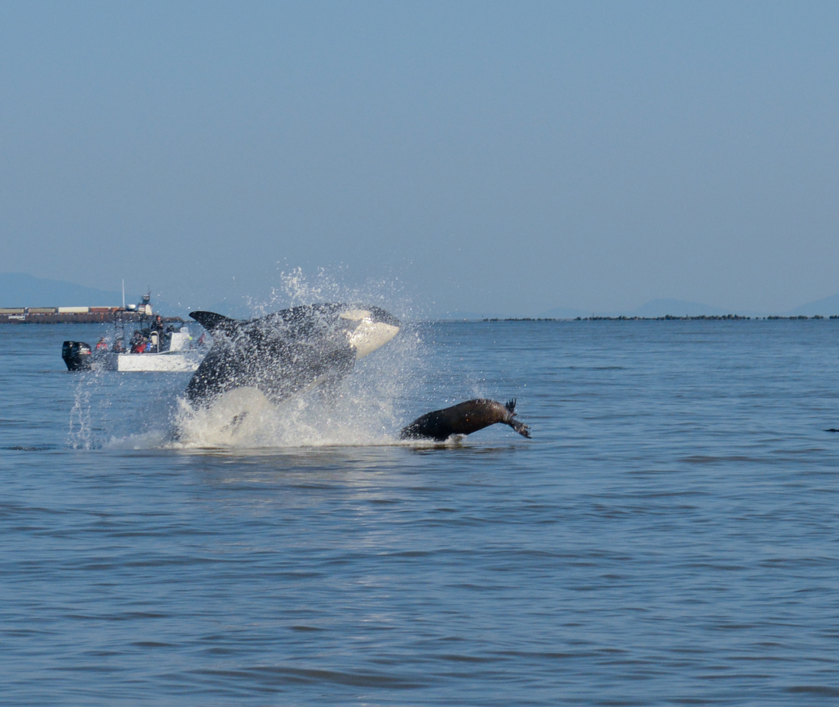 From life to LUNCH, the marine food chain in action! Photo by Lili Simon