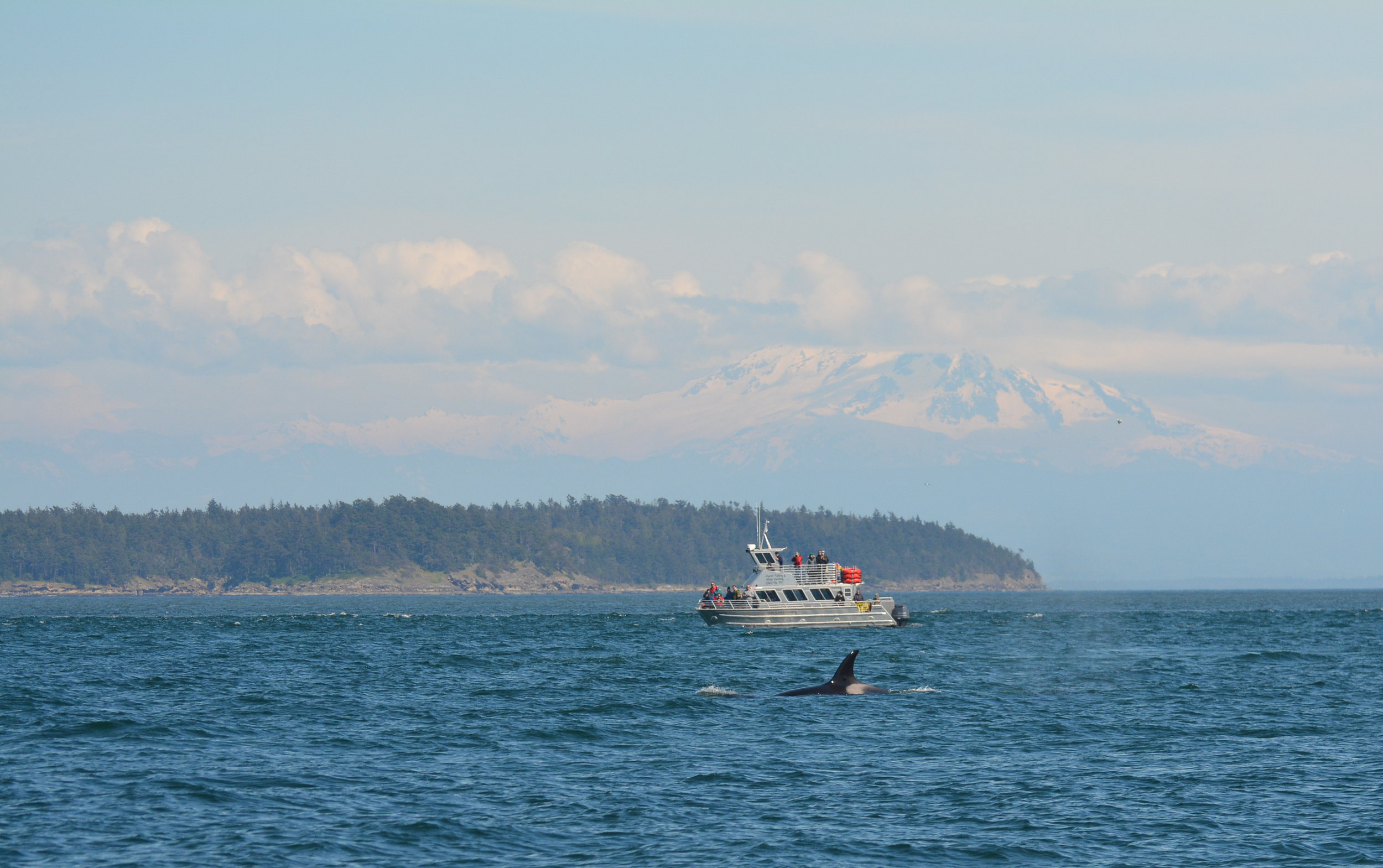 Whales with a mountain backdrop - does it get more British Columbia than this?? Photo by James Clyburn