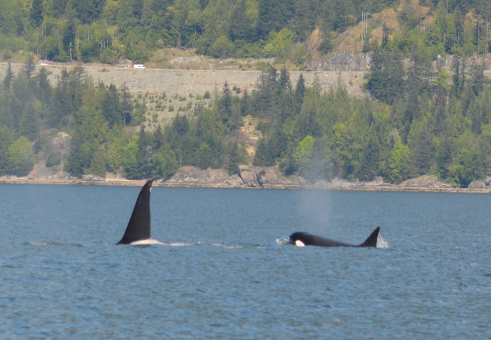 Beardslee (left) and Reef (right) travelling together in Howe Sound. Photo by Mike Campbell.