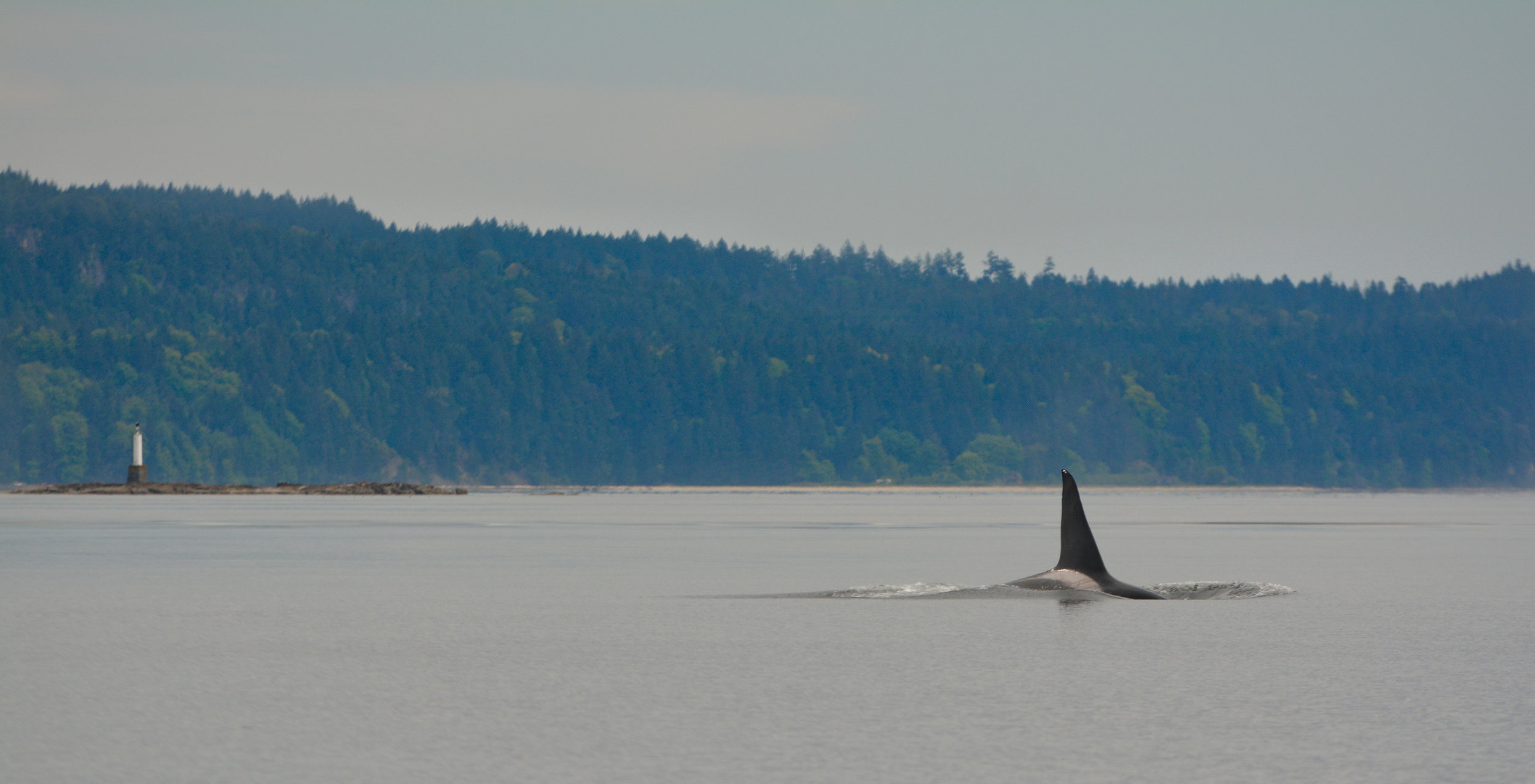 Brotehr T19C 'Spouter' cruising next to an islet in the Gulf Islands. Photo by Alanna Vivani