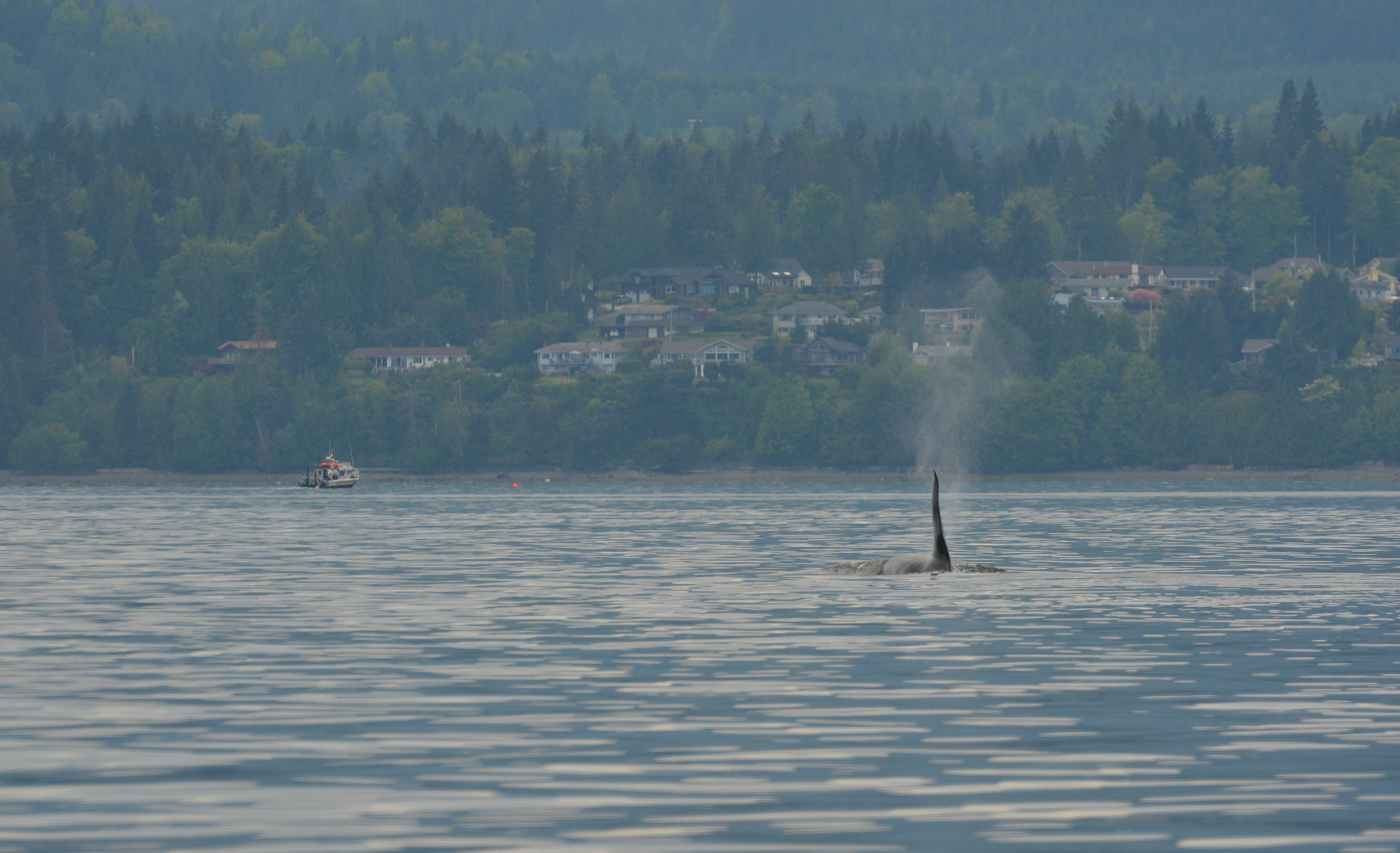 T19C was born in 2001. That fin might get even bigger! Photo by Alanna Vivani