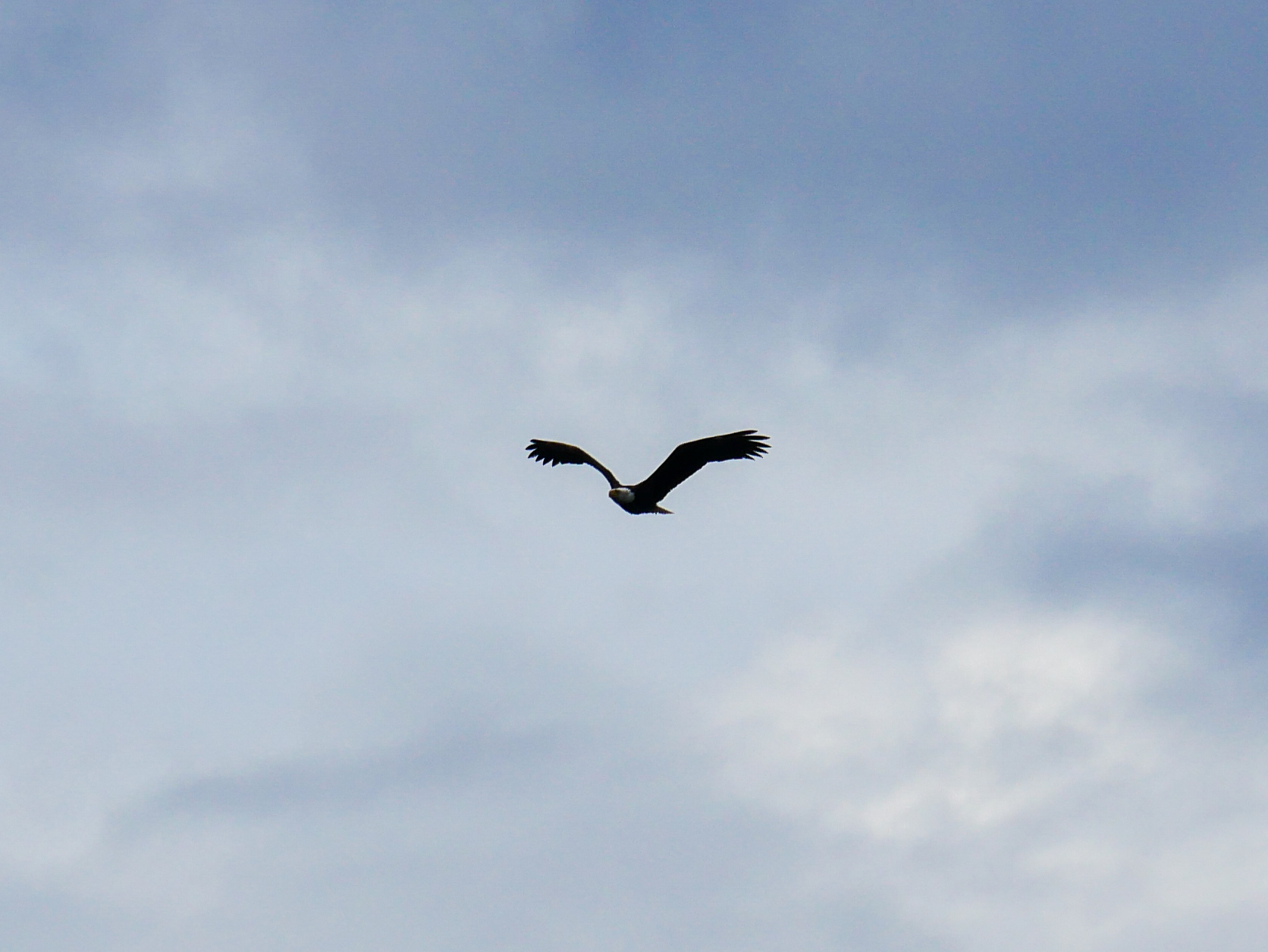 While on scene our guests got to enjoy a bald eagle flying overhead! Photo by Val Watson.
