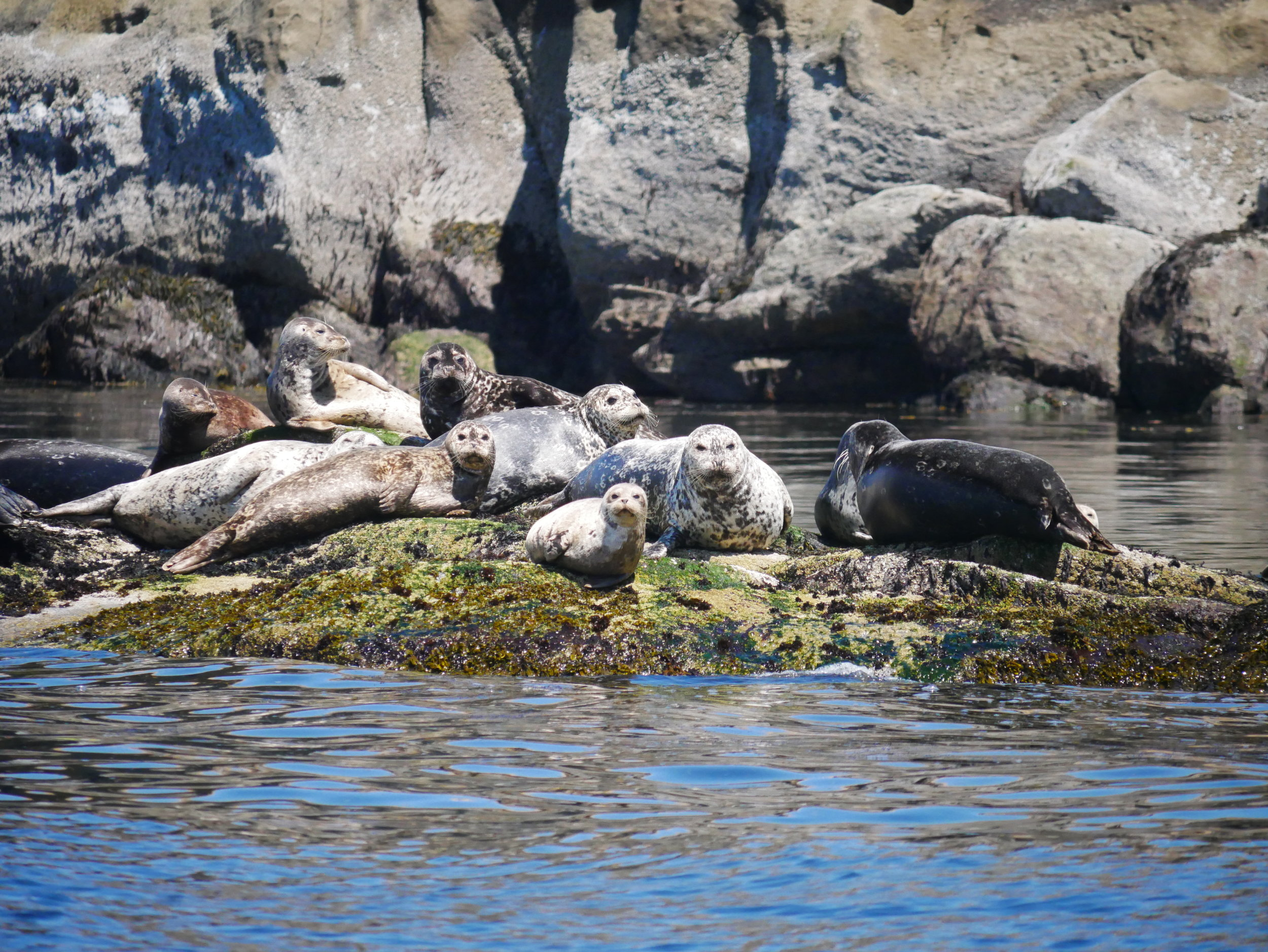 Seals of all shapes and sizes! Photo by Mike Campbell.
