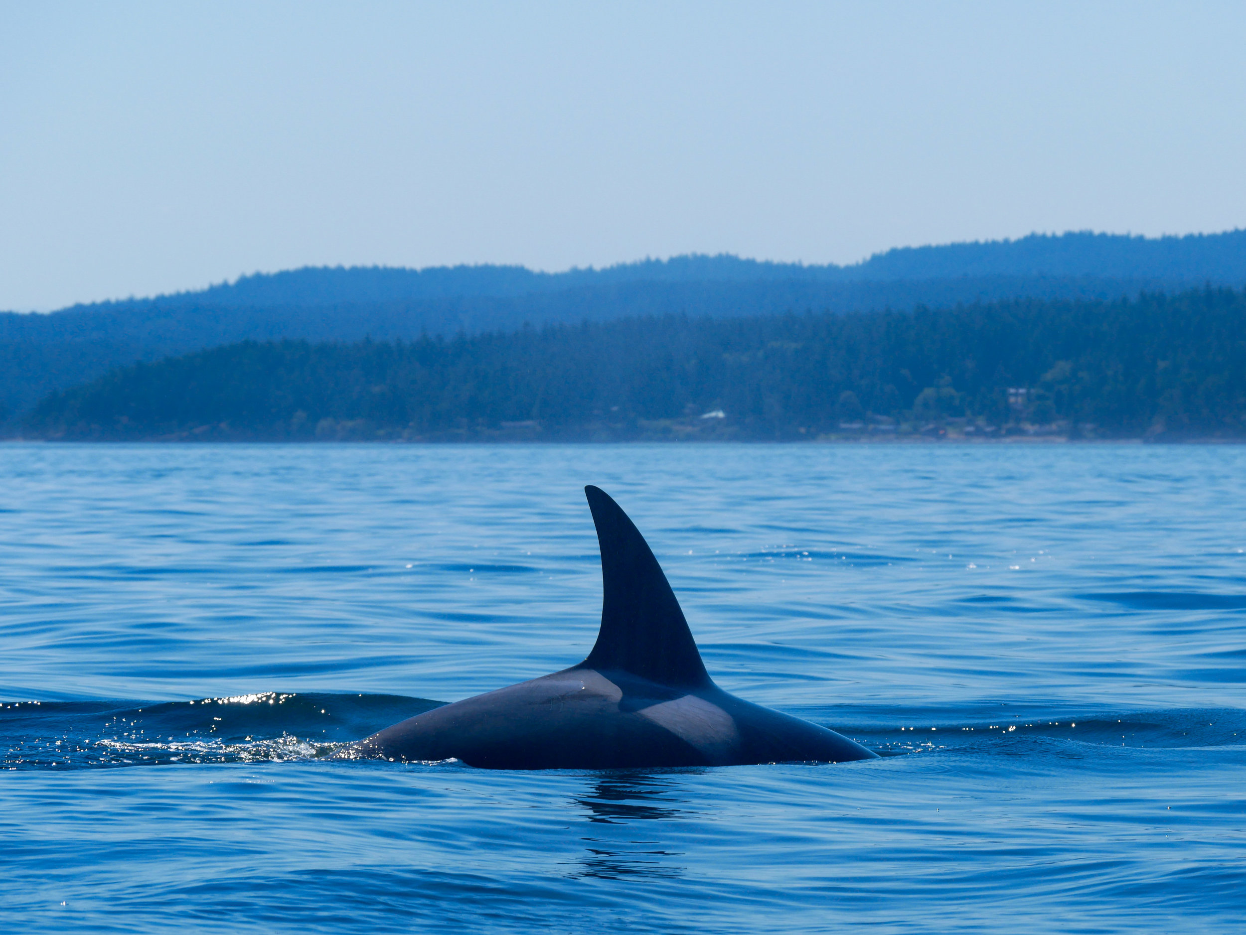 Breathtaking shot of a surface with the San Juan Islands in the background. Photo by Val Watson.