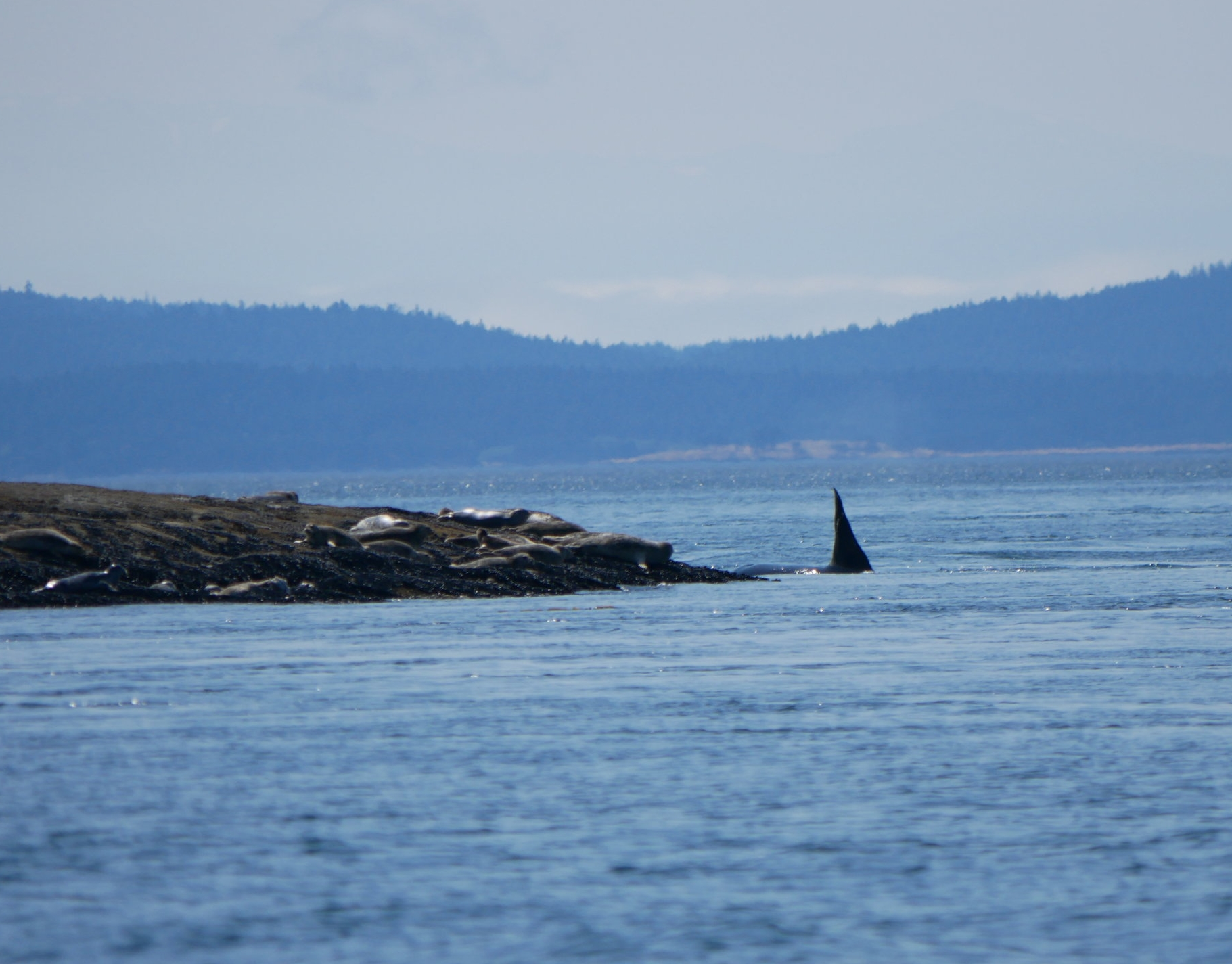 T19C circling around the reef with a bunch of scared seals taking shelter on the rocks. Photo by Val Watson