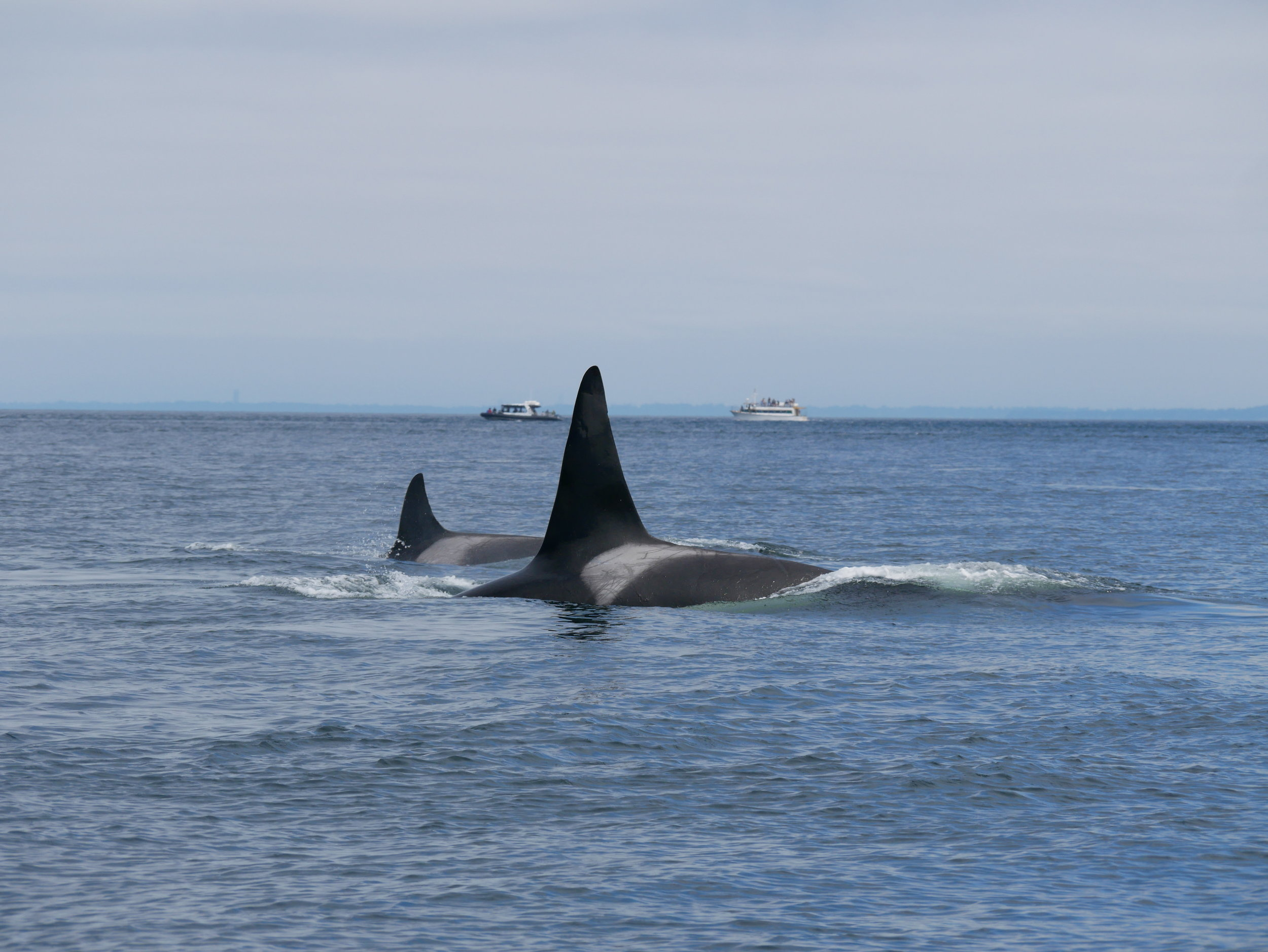 Check out the size difference here! WOW! Photo by Val Watson