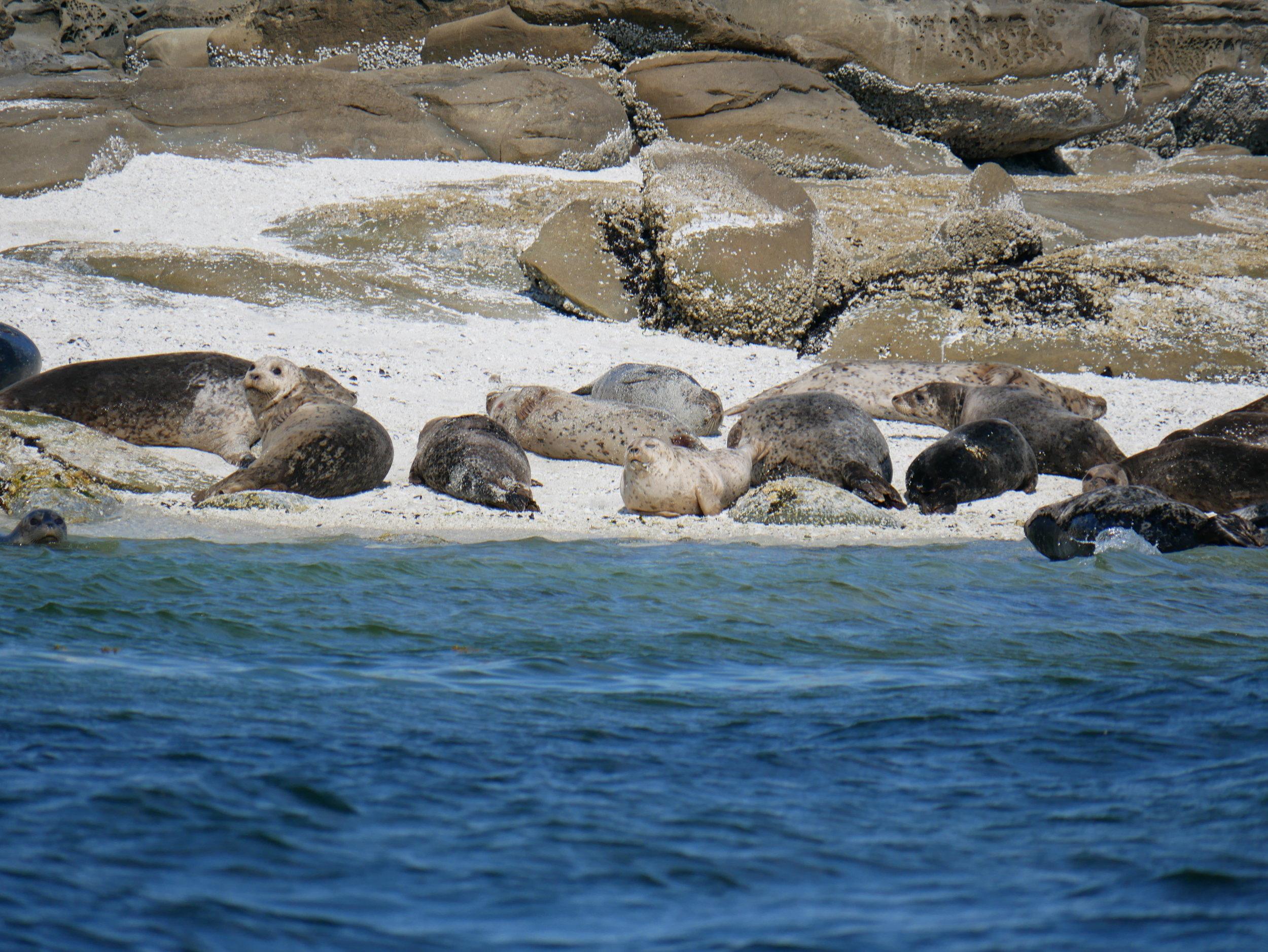 A bunch of lazy beach bums. Photo by Rodrigo Menezes.