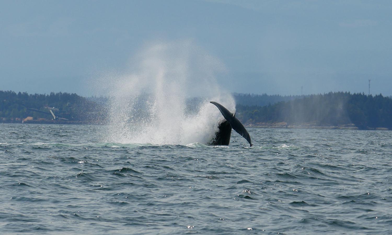 Cartwheel! Check out that splash! Photo by Rodrigo Menezes.