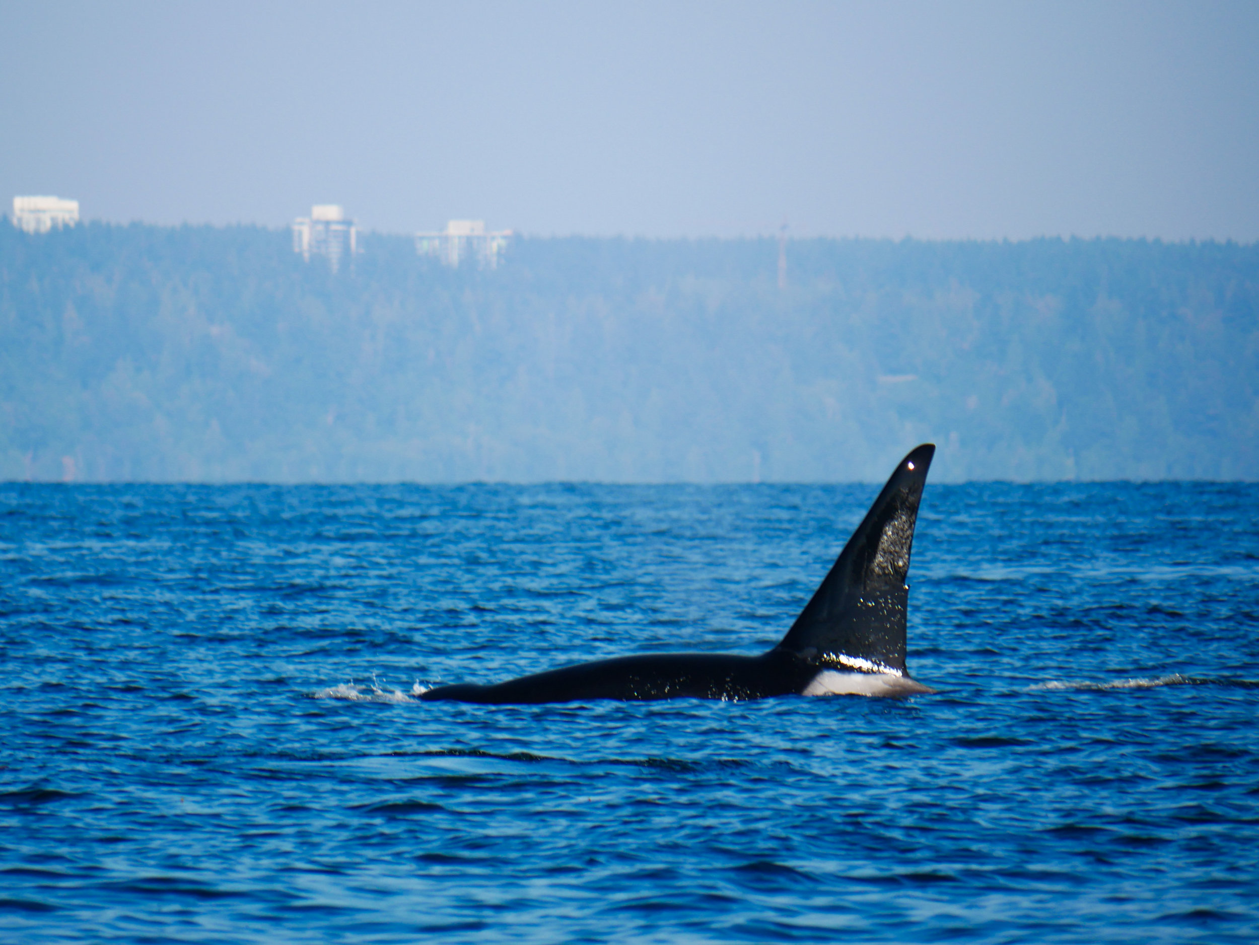 T46E (15 year old male) surfacing. Photo by Val Watson - 3:30 tour.