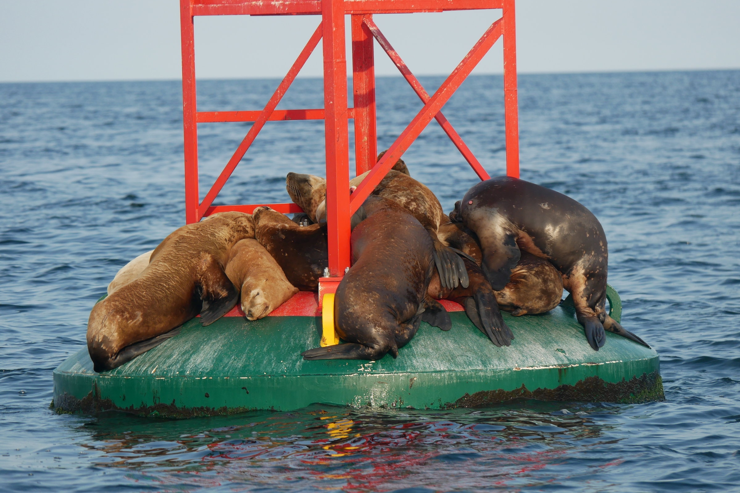 Sea lions... not ones for personal space. Photo by Alanna Vivani.