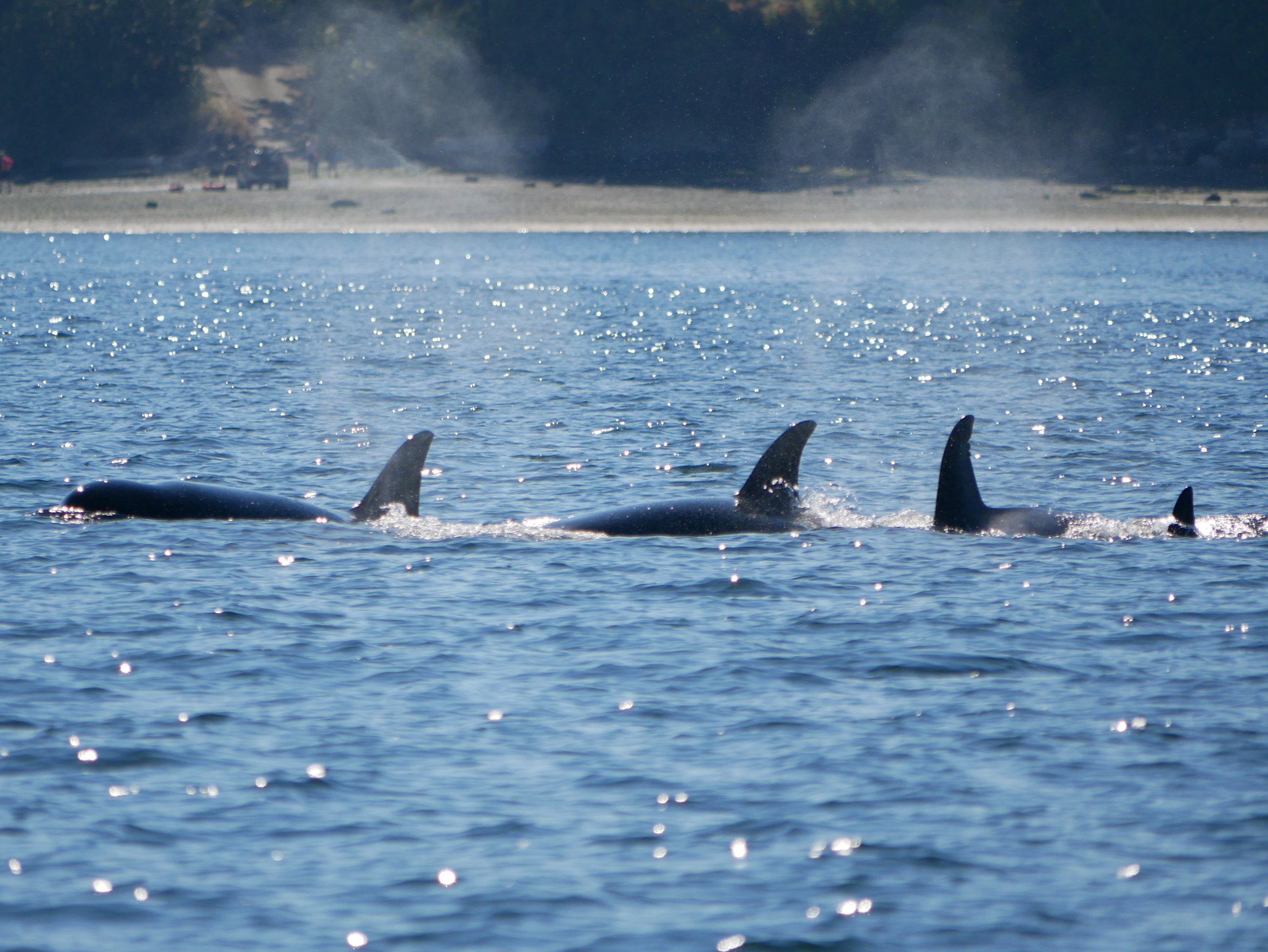 A happy family surfacing together! Photo by Val Watson.