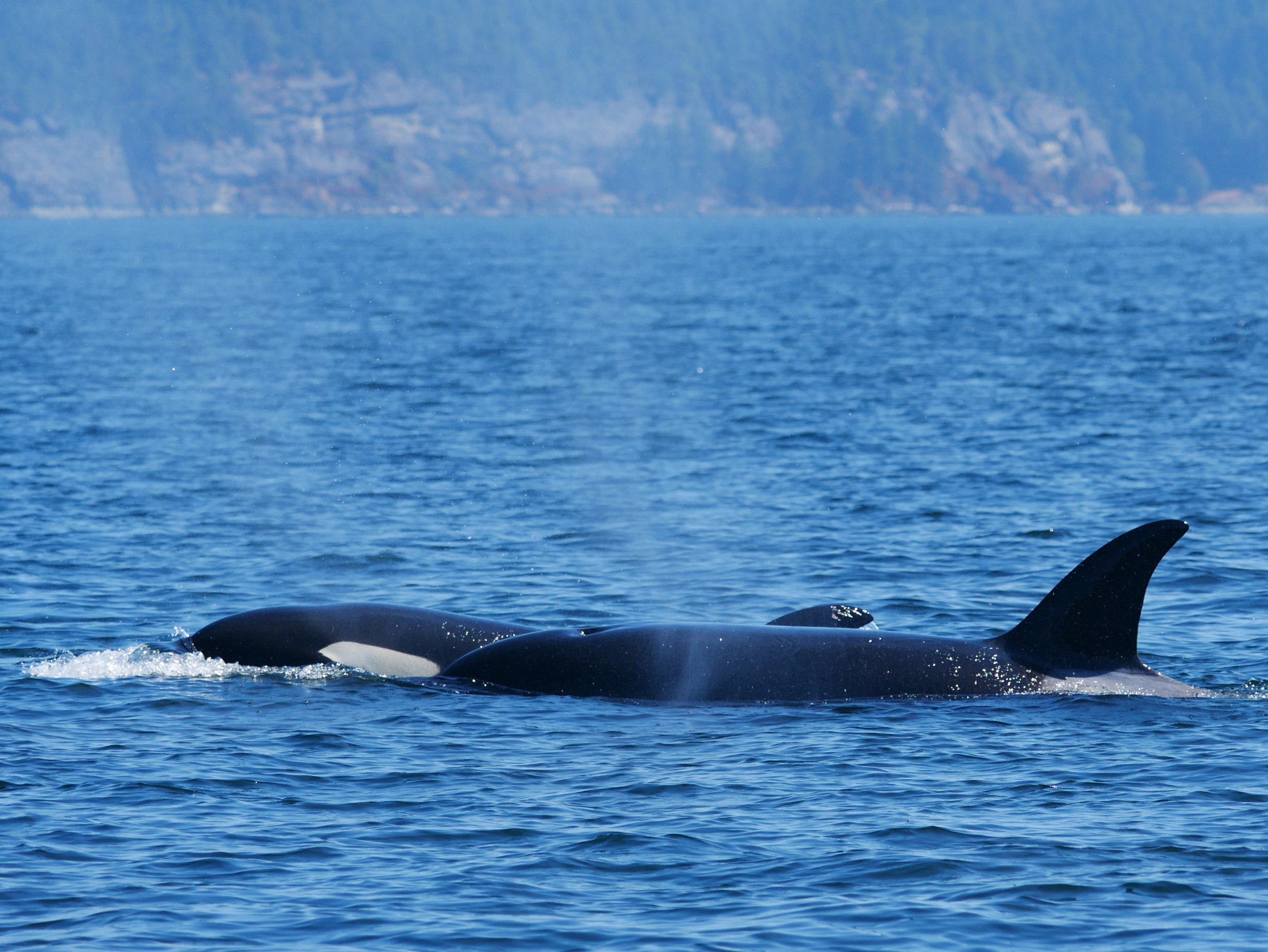 Holly and her mom surfacing together. Photo by Val Watson.
