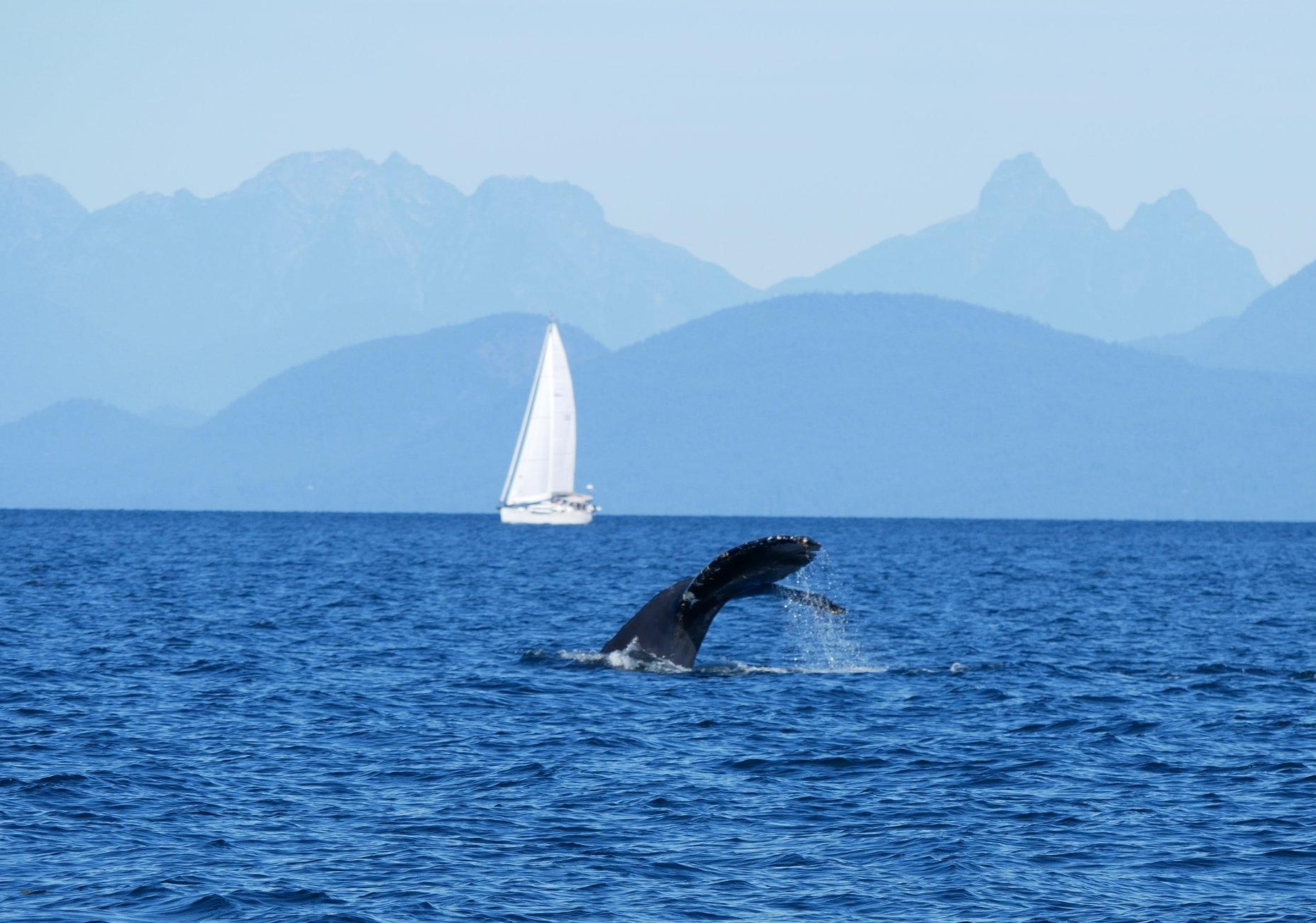 Beautiful British Columbia. Photo by Rodrigo Menezes