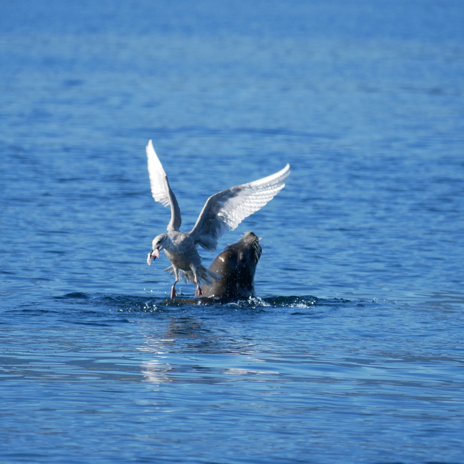 seagull stole some grub!