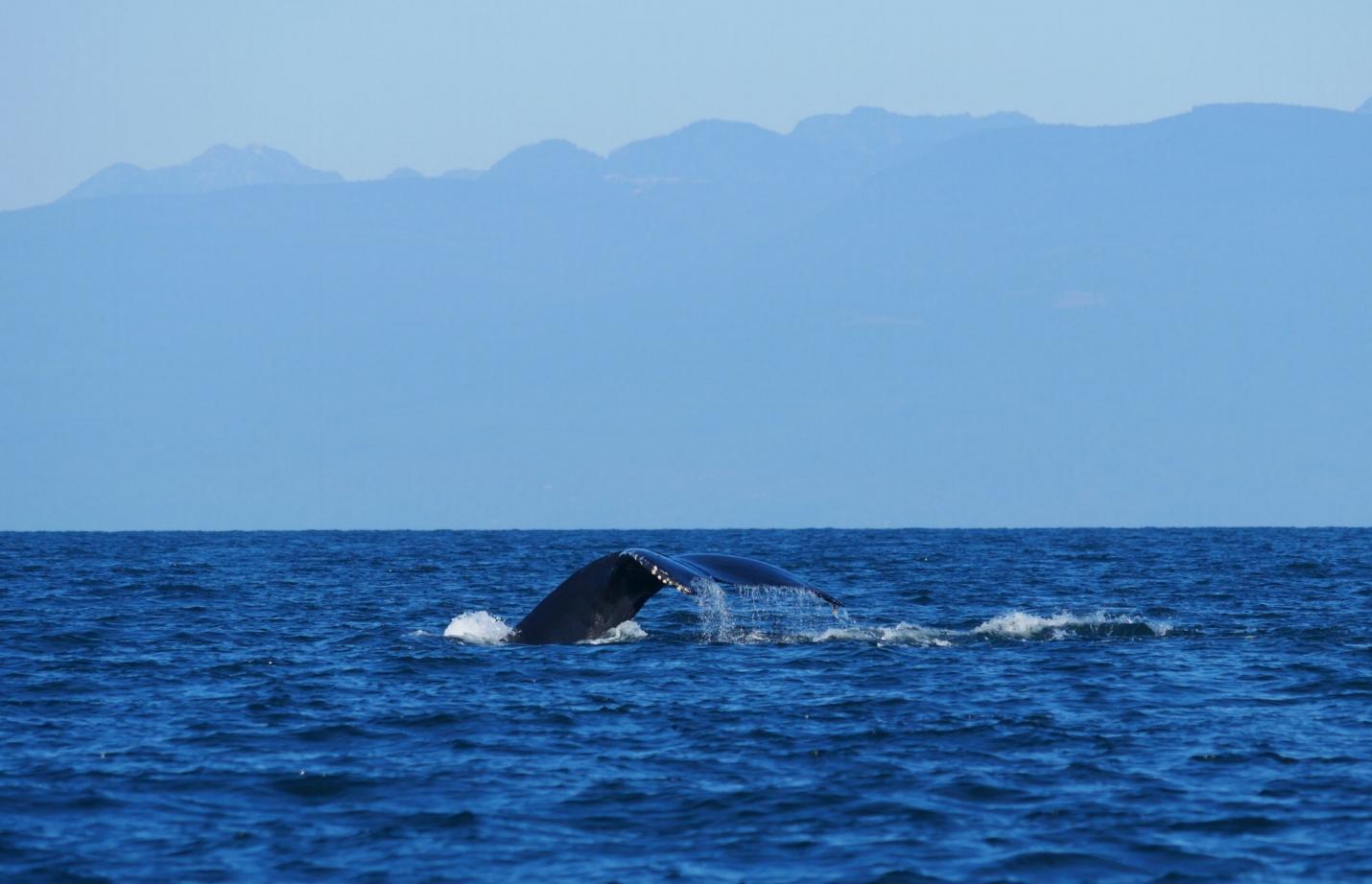 Whale-fall