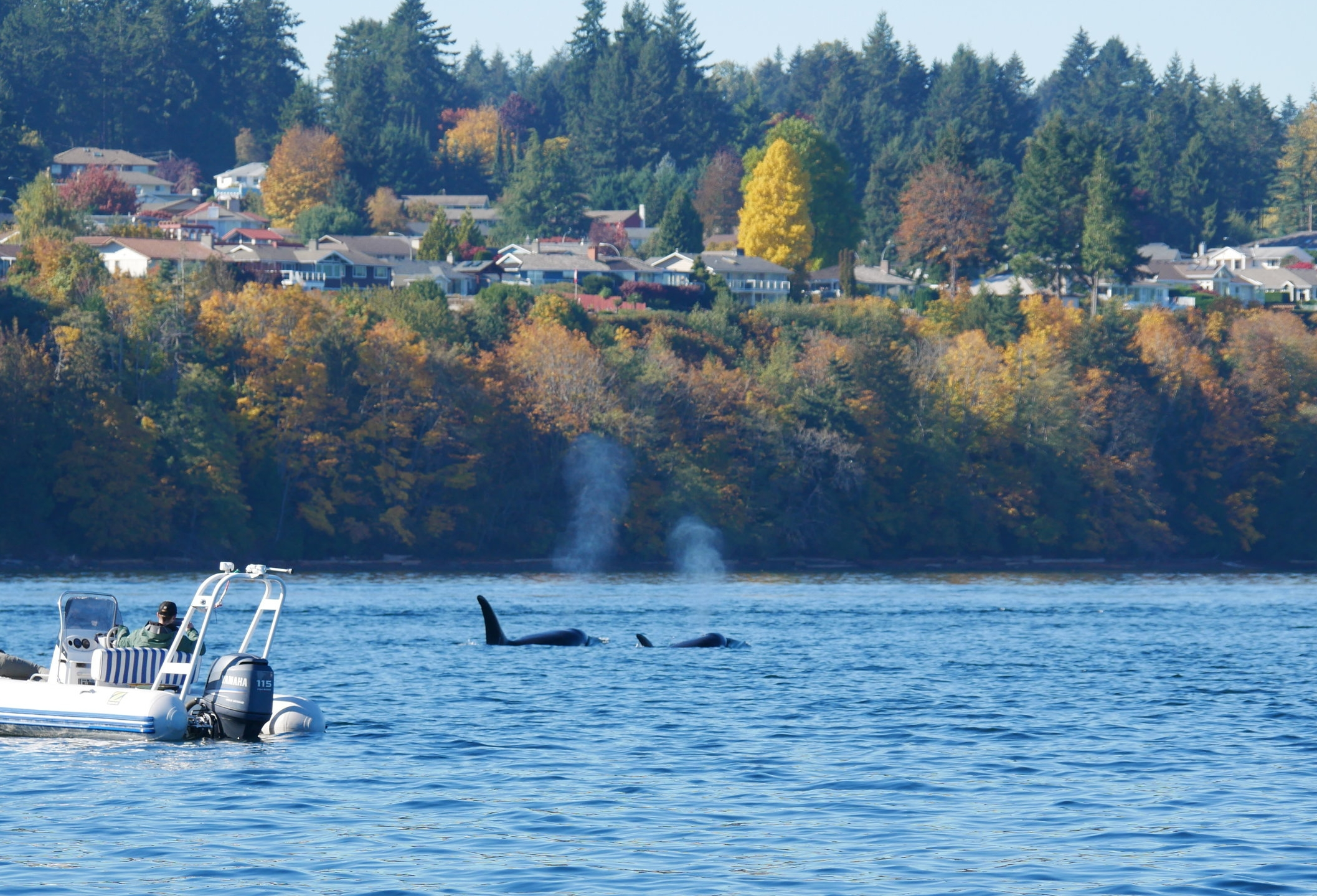 Beautiful fall colours and whales - love it!