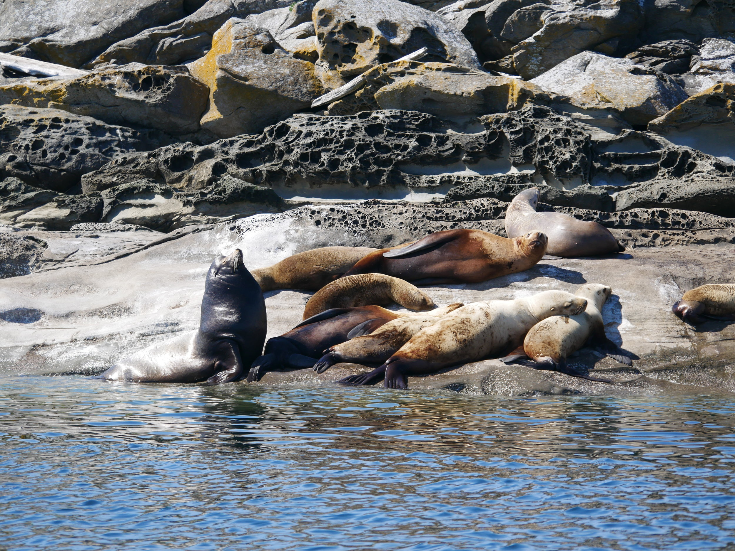 The day wouldn't be complete without a visit to our friendly neighbourhood sea lions!