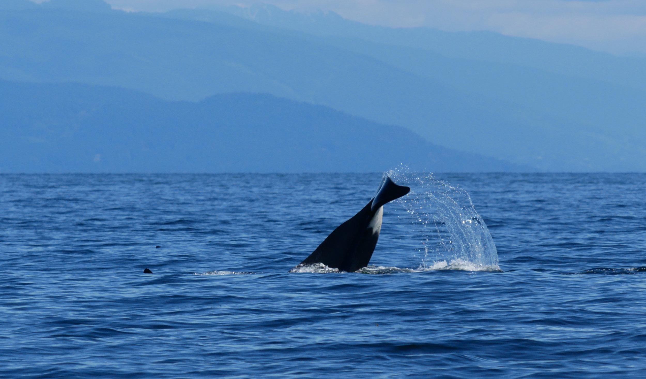 Big tail lob! Photo by Cheyenne Brewster.