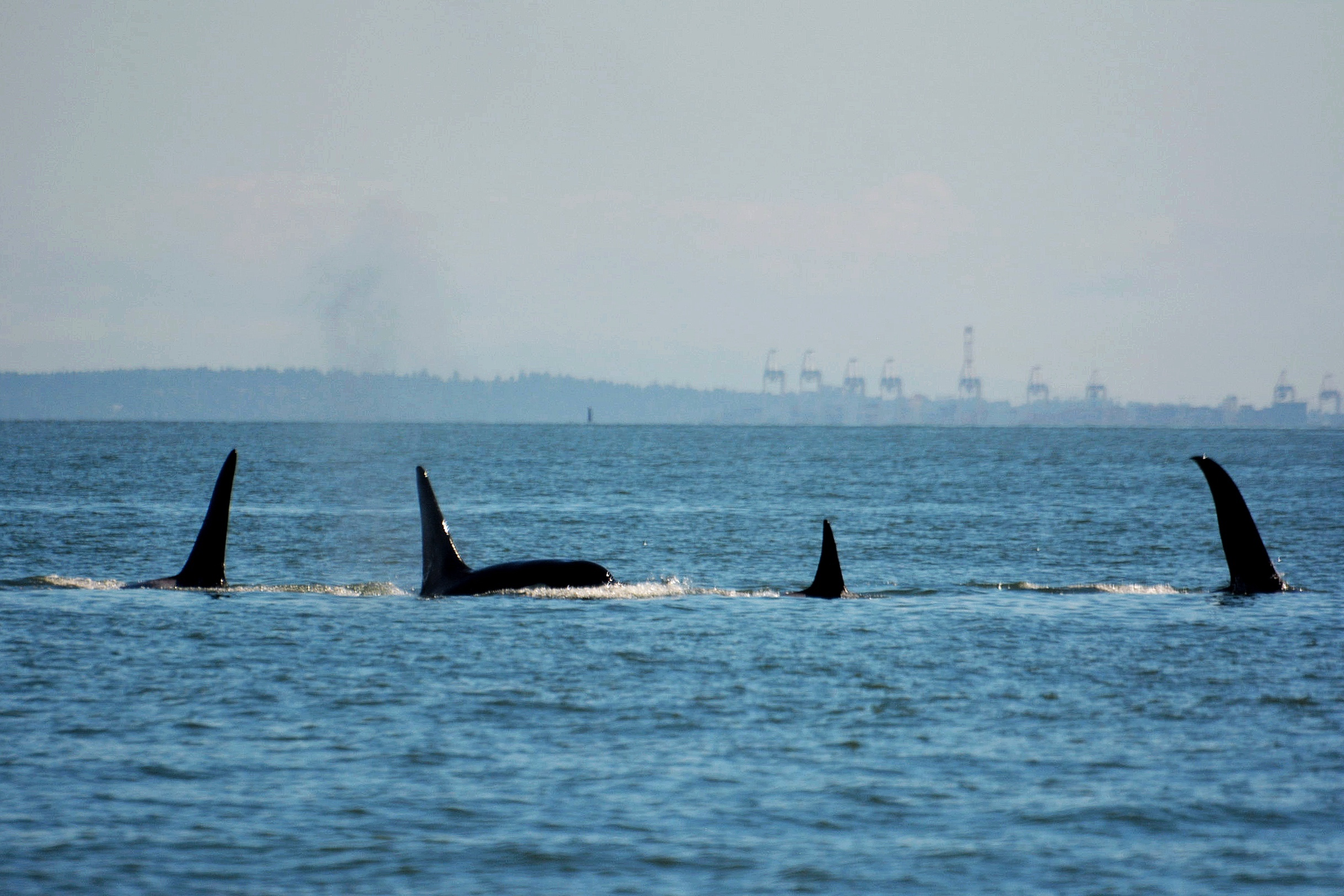 From left to right: Lagoon (T101B), Rush (T101A), Reef (T101), Beardslee (T102). Photo by Val Watson.