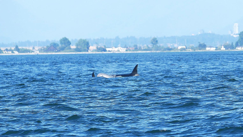 White Whale!! Photo by Rebeka Pirker