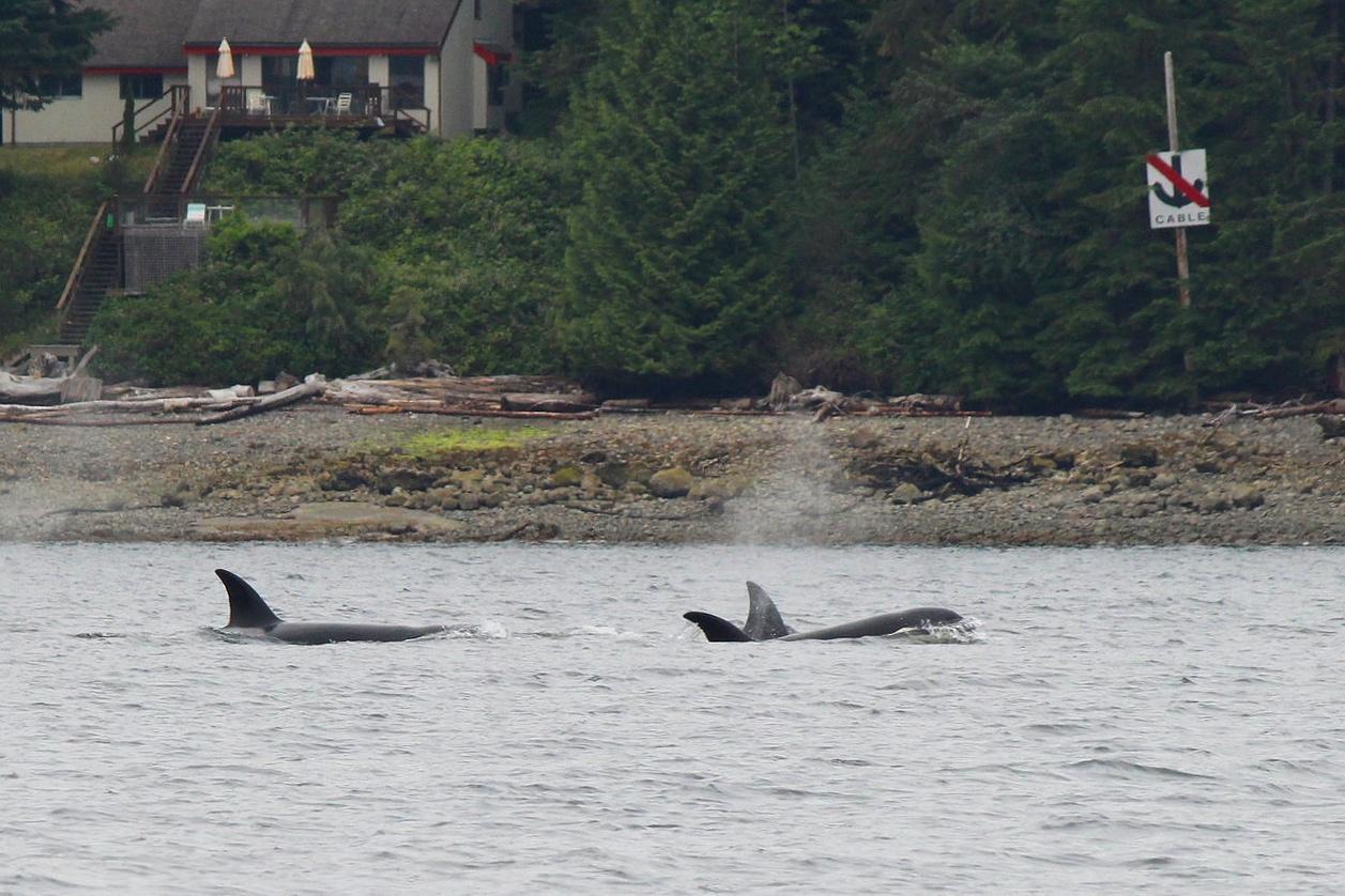 T99's in Howe Sound. Photo by Natalie Reichenbacher (10:30).