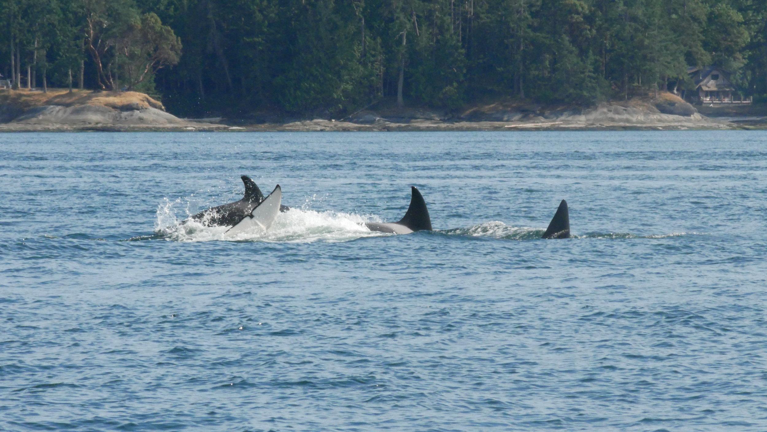 Spot the fluke! Photo by Cheyenne Brewster (3:30).