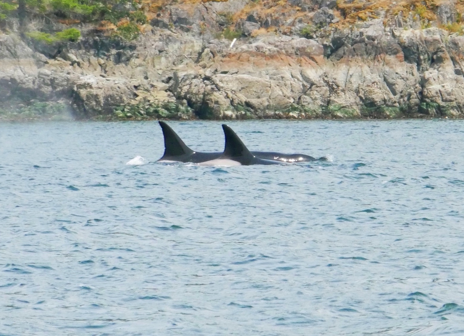 Swimming together. Photo by Cheyenne Brewster (10:30).