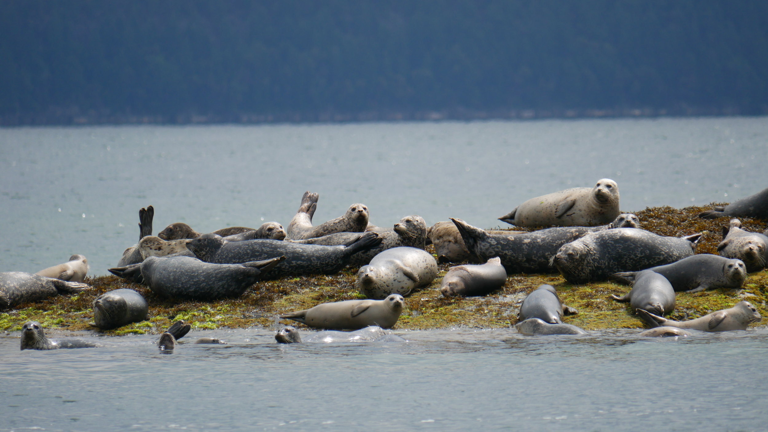 The harbour seals were watching us! Photo by Val Watson.