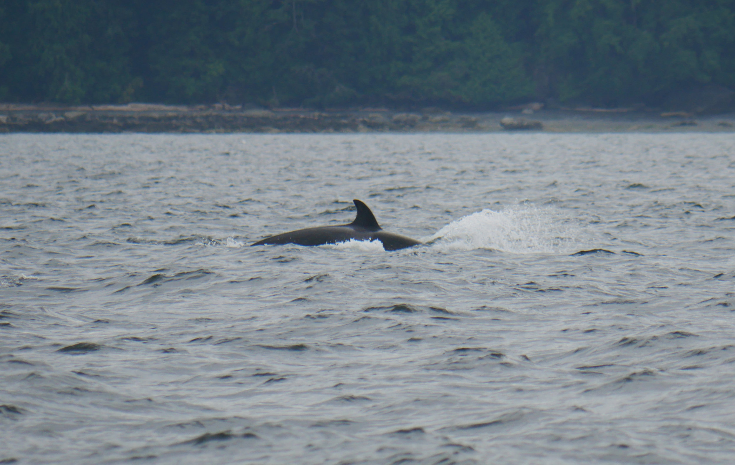T124A2B cruising through the water. Photo by Ryan Uslu.