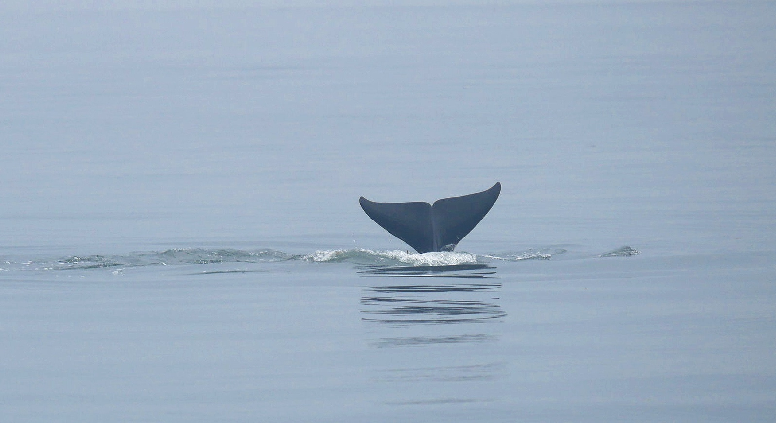 Tail fins! Photo by Cheyenne Brewster. (10:30)