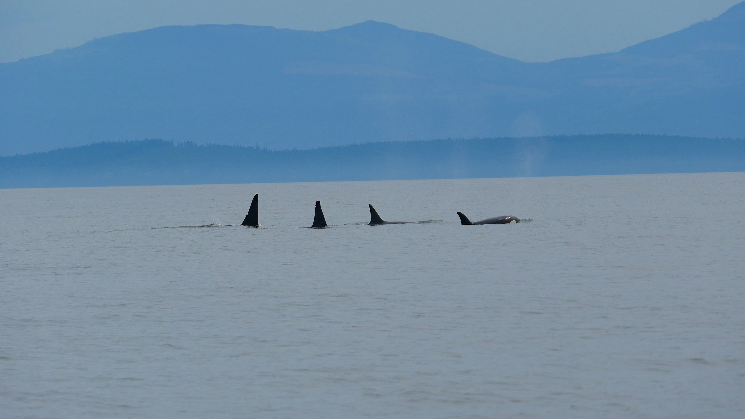 Left to right: Camillo (T46E), T46D, Wake (T46), T46. Photo by Rebeka Pirker (3:30).