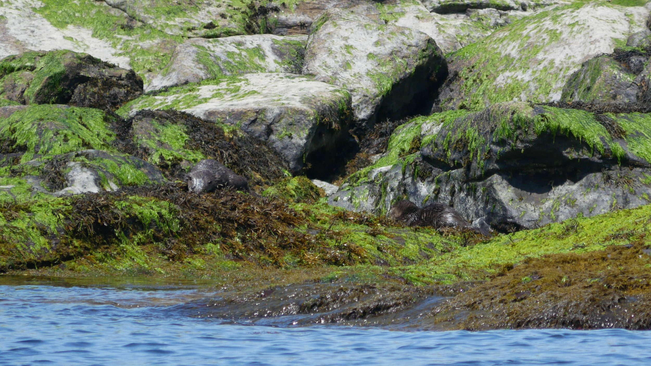 Can you spot the otters here? Photo by Val Watson.