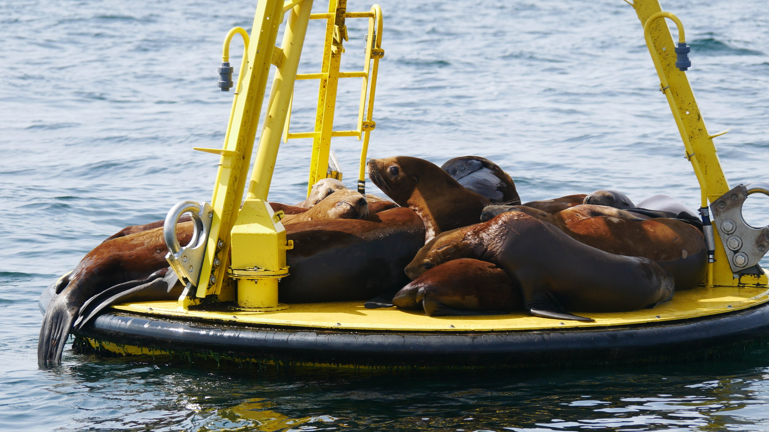Lazy sea lions in the sun. Photo by Jilann Campbell.